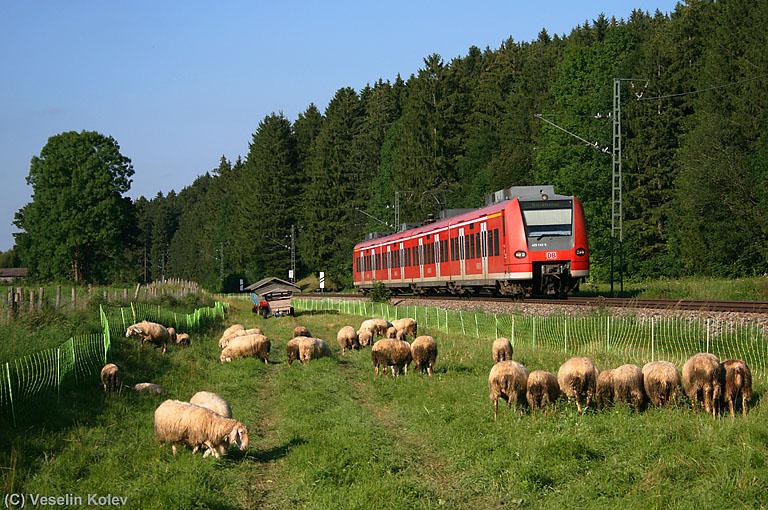 Wir befinden uns unweit vom Dorf Fellach am Nachmittag des 6.08.2009. Die ländliche Beschaulichkeit wird kurz durch 425 143 unterbrochen, der als Regionalbahn in Richtung Holzkirchen unterwegs ist.