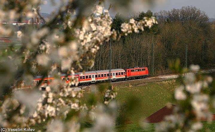 Endlich ist der Frühling da: Am 17.04.2010 blühen in Aßling schon die ersten Bäume. Im Bild eine Lok der Reihe 111, die mit ihrem Regionalexpress-Zug Aßling in Richtung Salzburg verlässt.